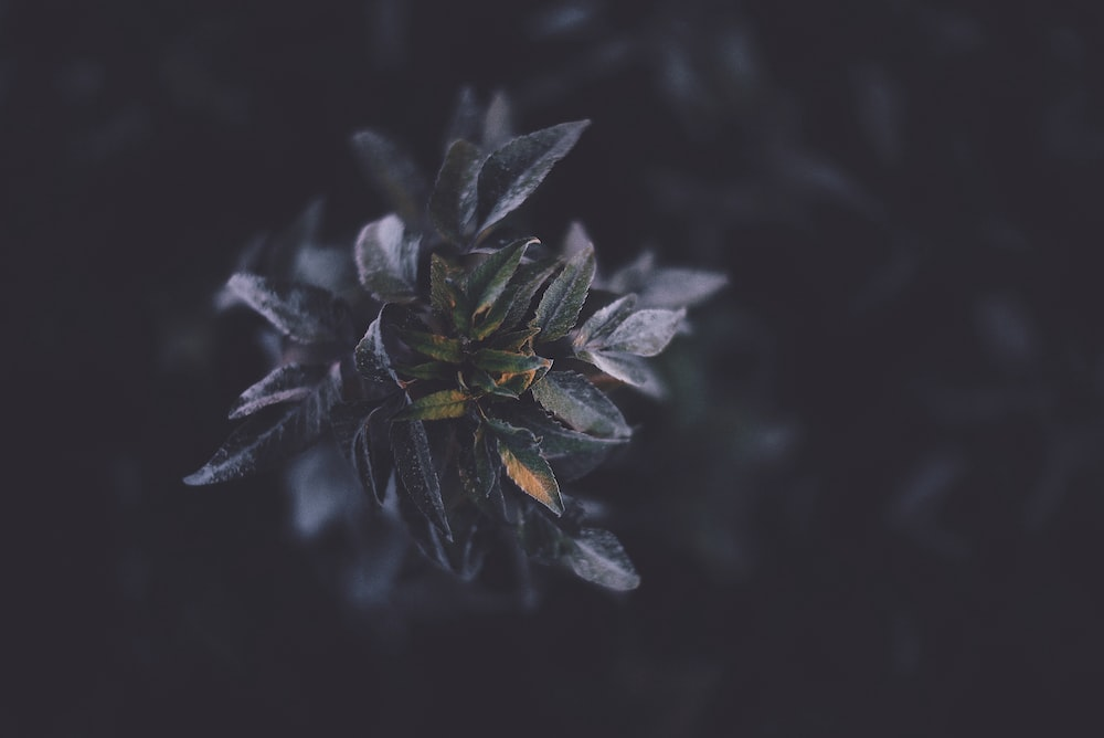 selective focus photography of green plant