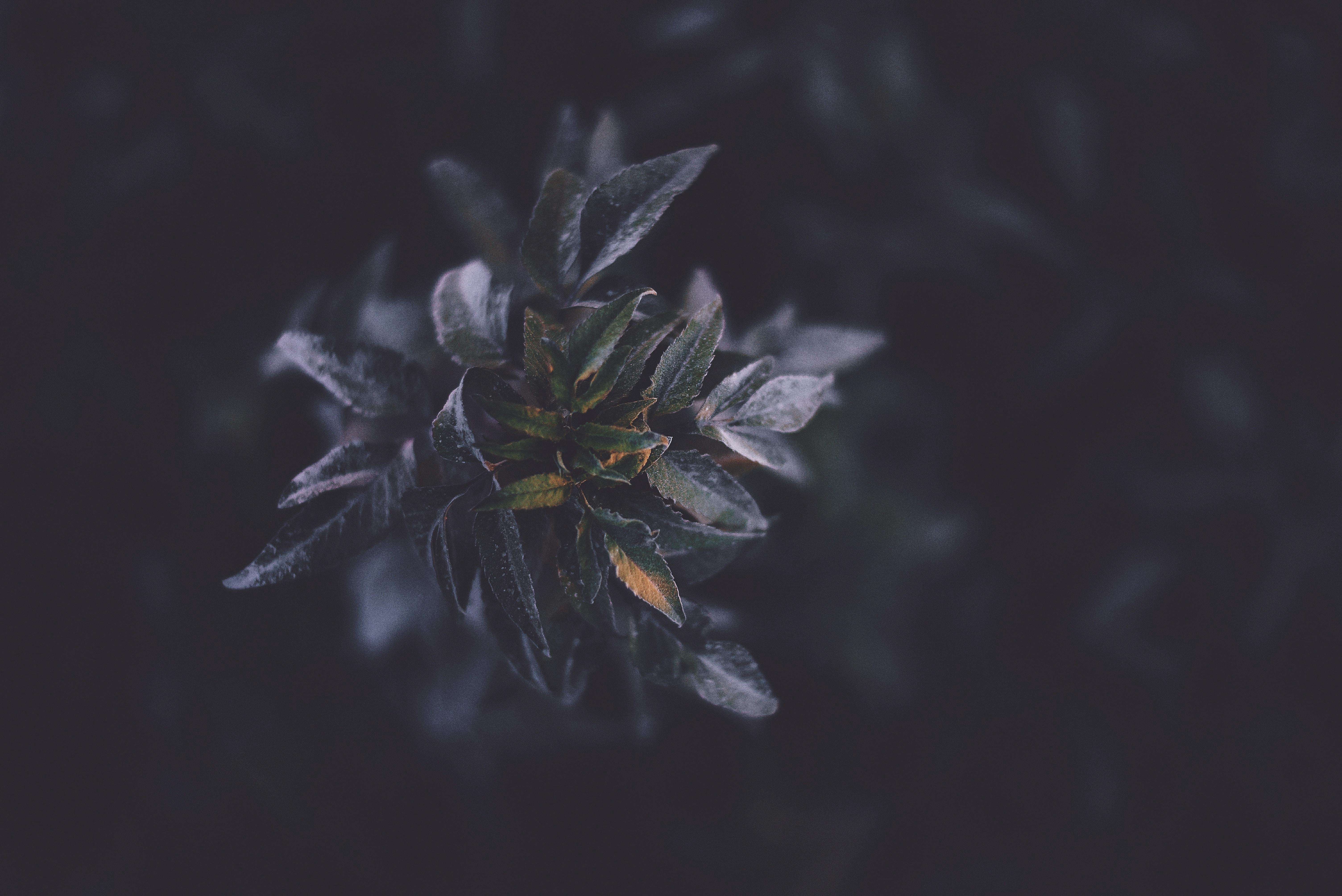 A macro shot of dark-colored leaves.