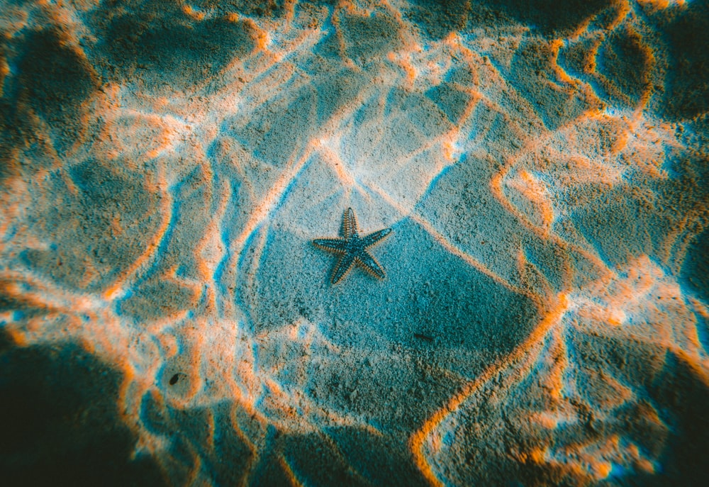 star fish under water