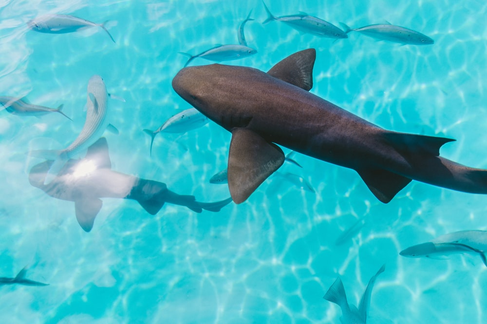 sharks on body of water