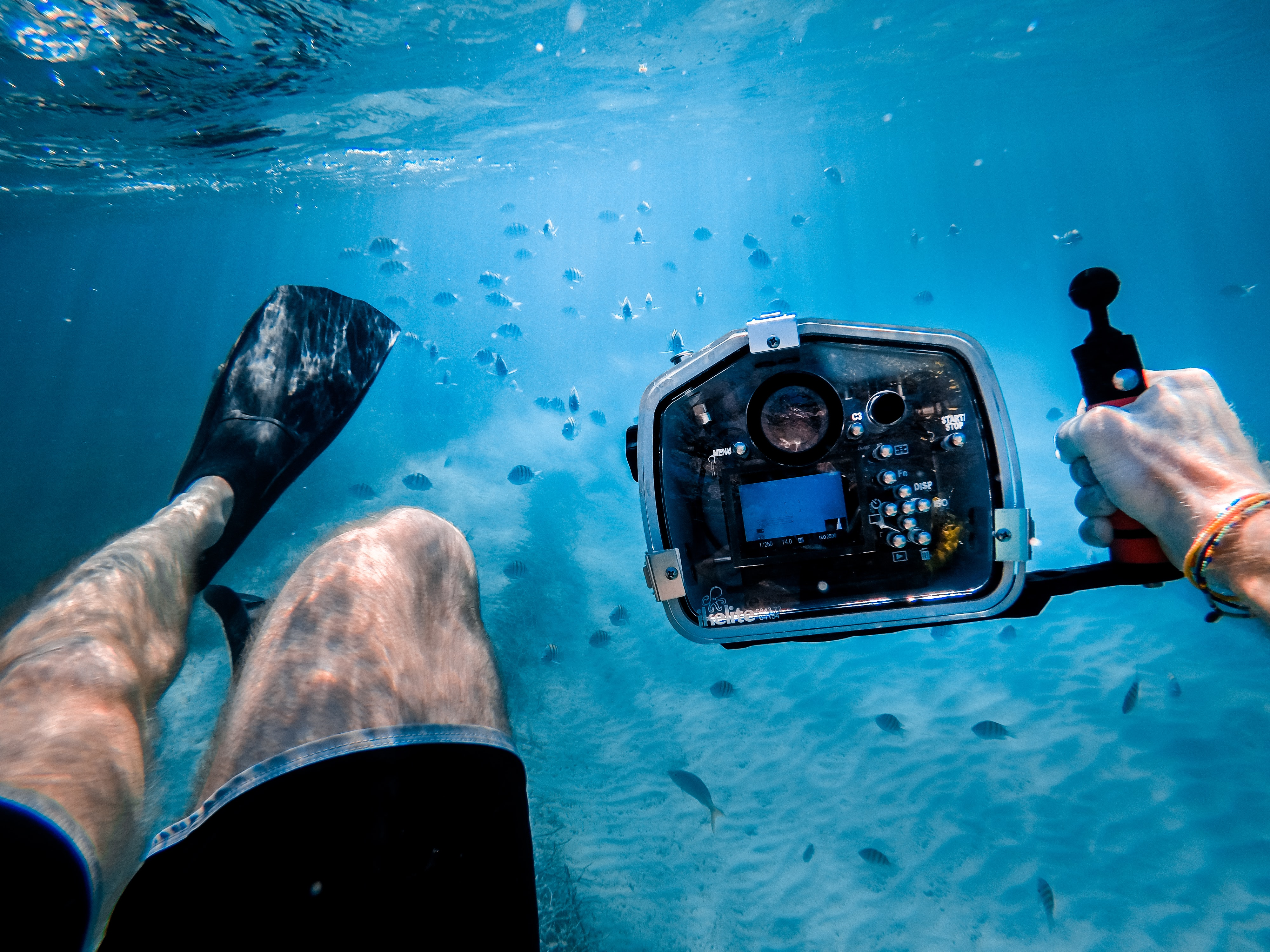 An underwater shot of a diver taking photos of the fishes and the seabed.