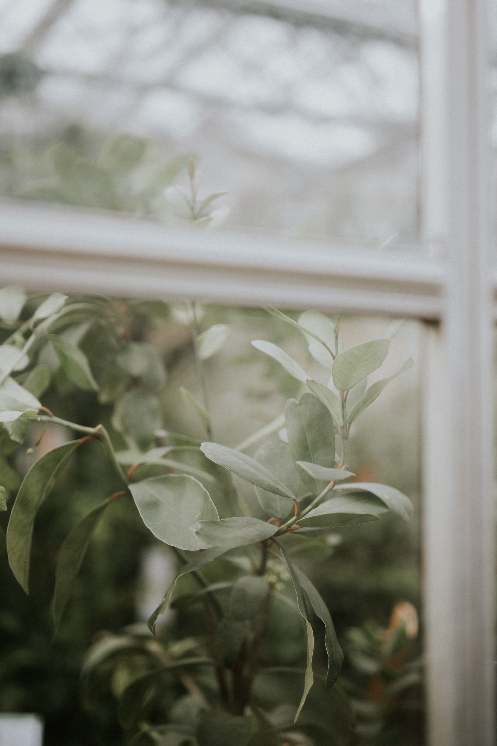 Branches with green ovate leaves seen through a window pane