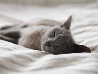 Cat photo by Alexander Possingham on unsplash.com
