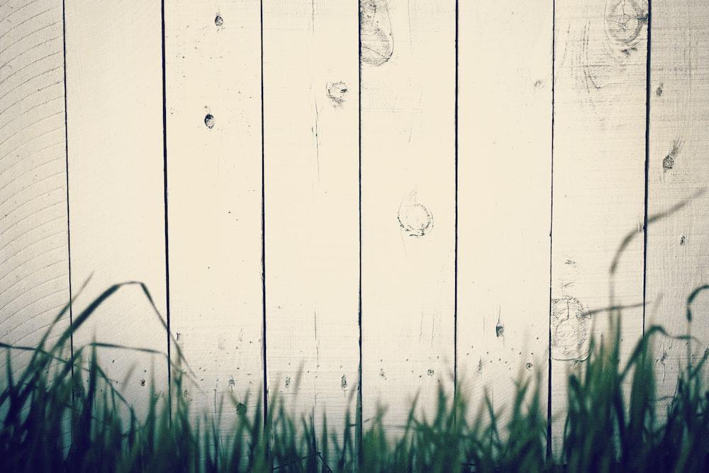 green grass near beige wall
