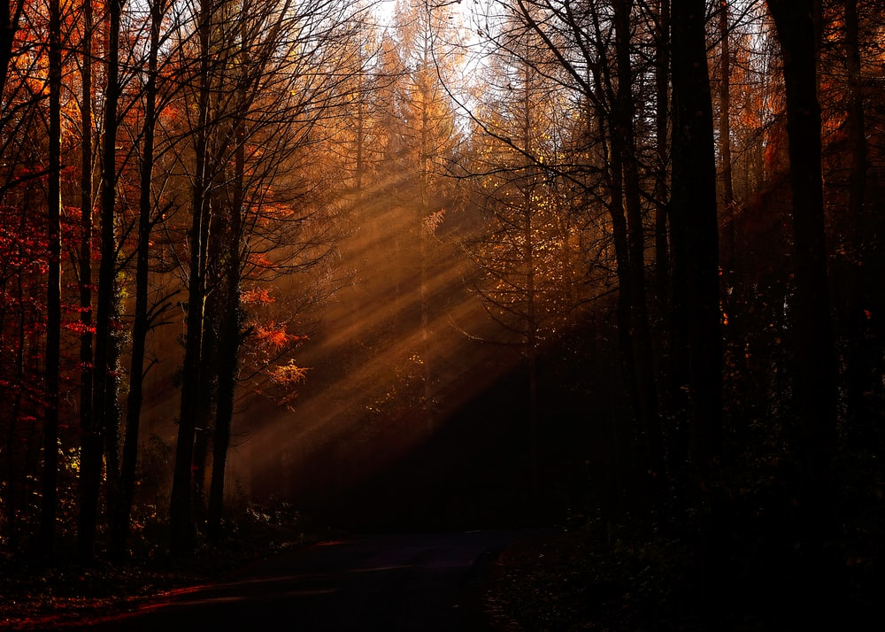pine and bare trees lighted by sunlight
