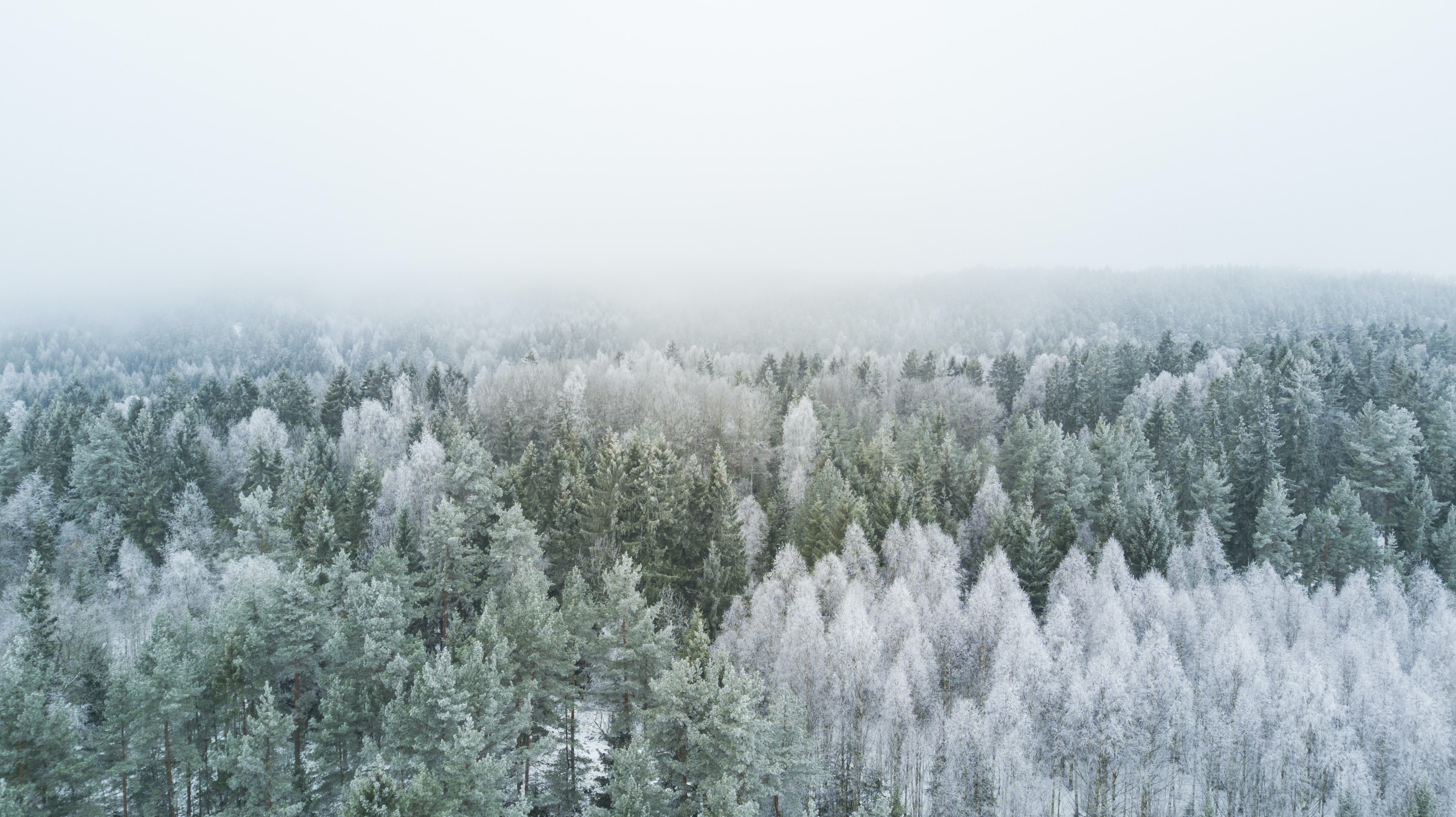 A vast evergreen forest with white frost on tree branches