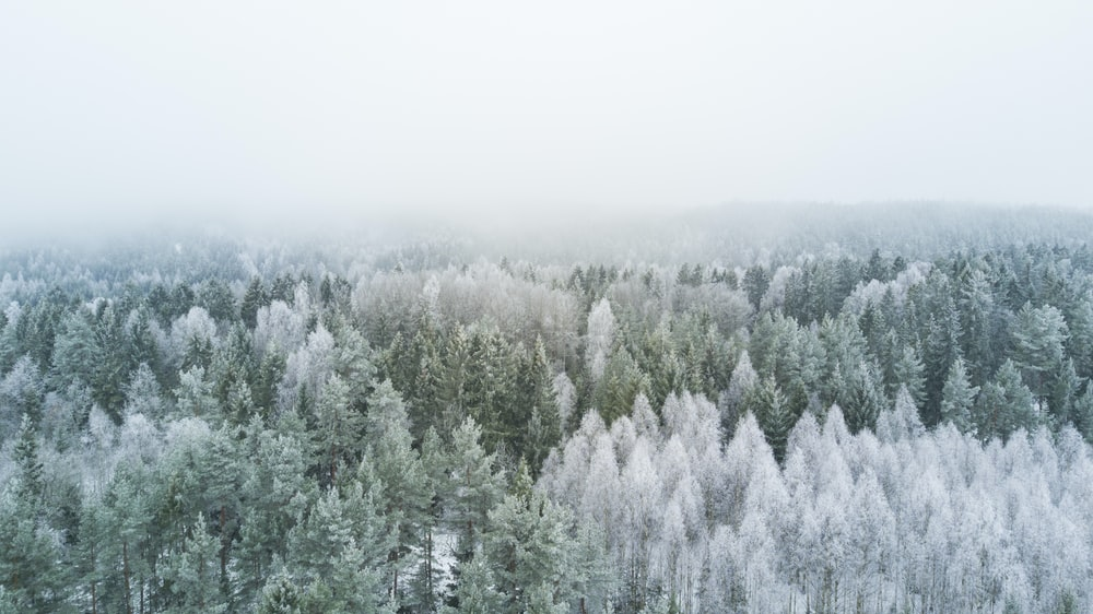 Best 500 Winter Pictures 2020 Download Free Images Stock Photos On Unsplash