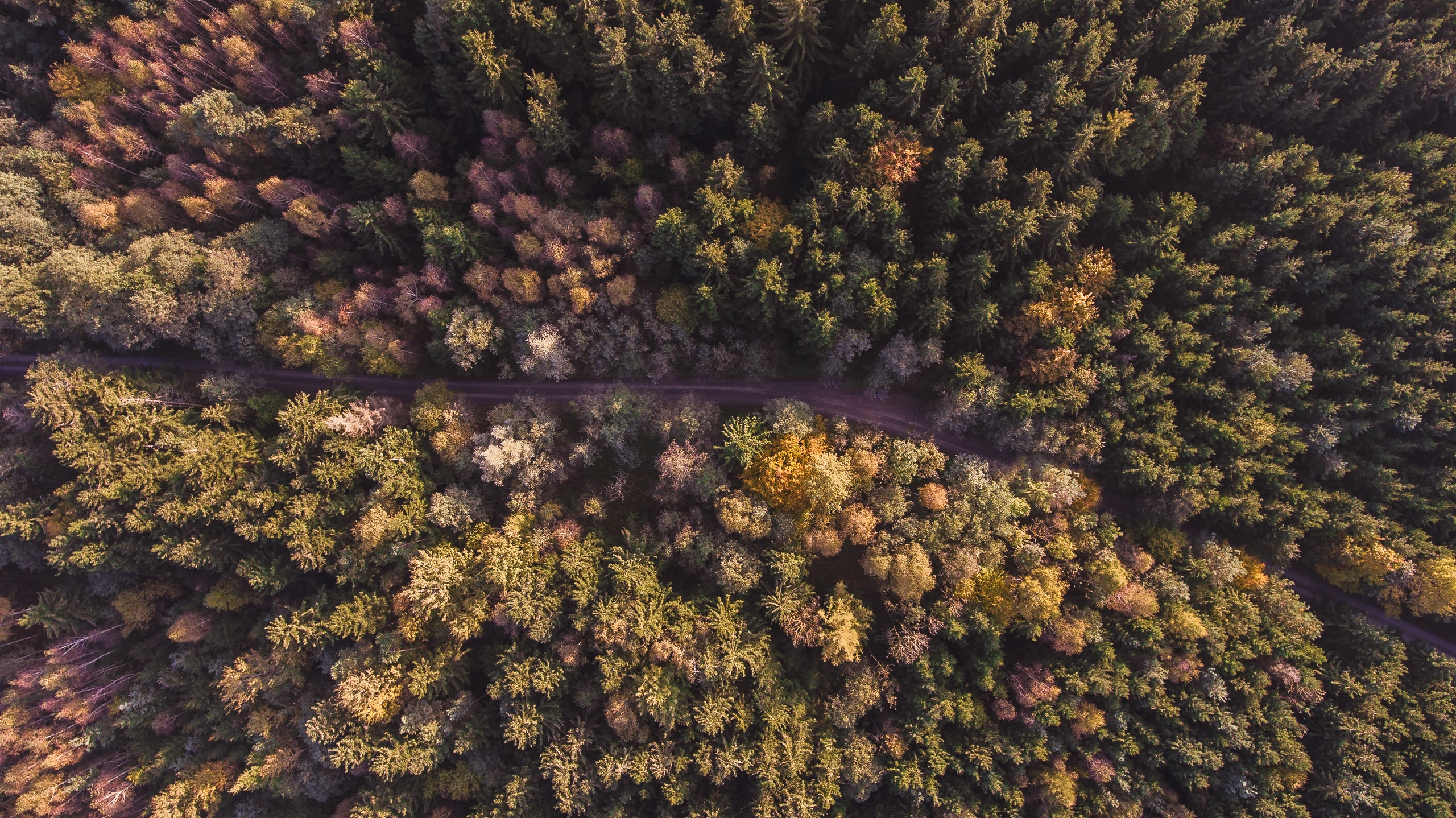 A drone shot of an empty road through a forest
