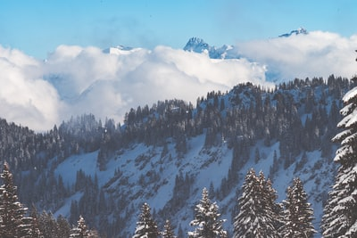 Wintry forest in the mountains