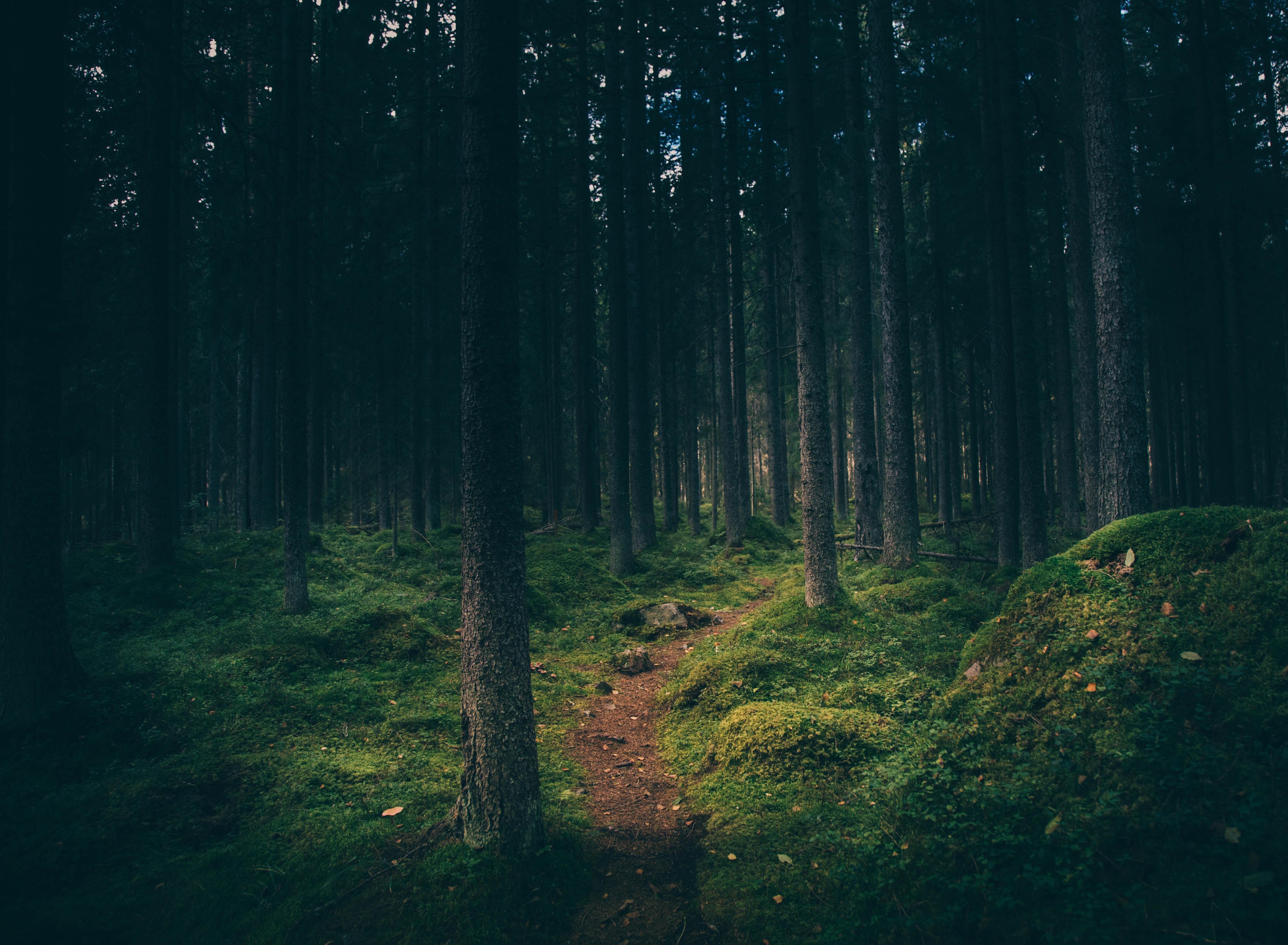 A narrow footpath in a dark forest in Gävle
