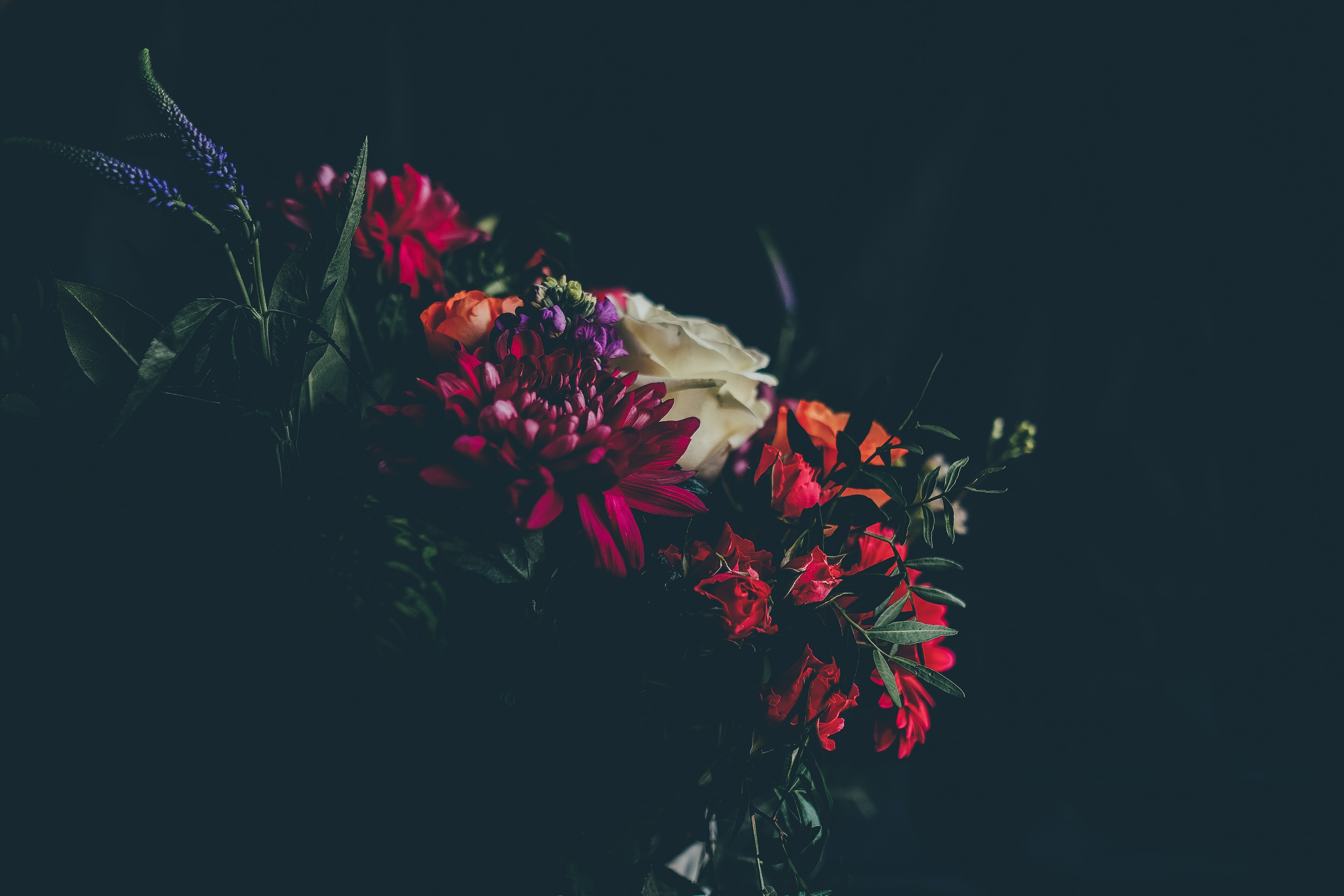 selective photography of orange, red, and yellow flowers