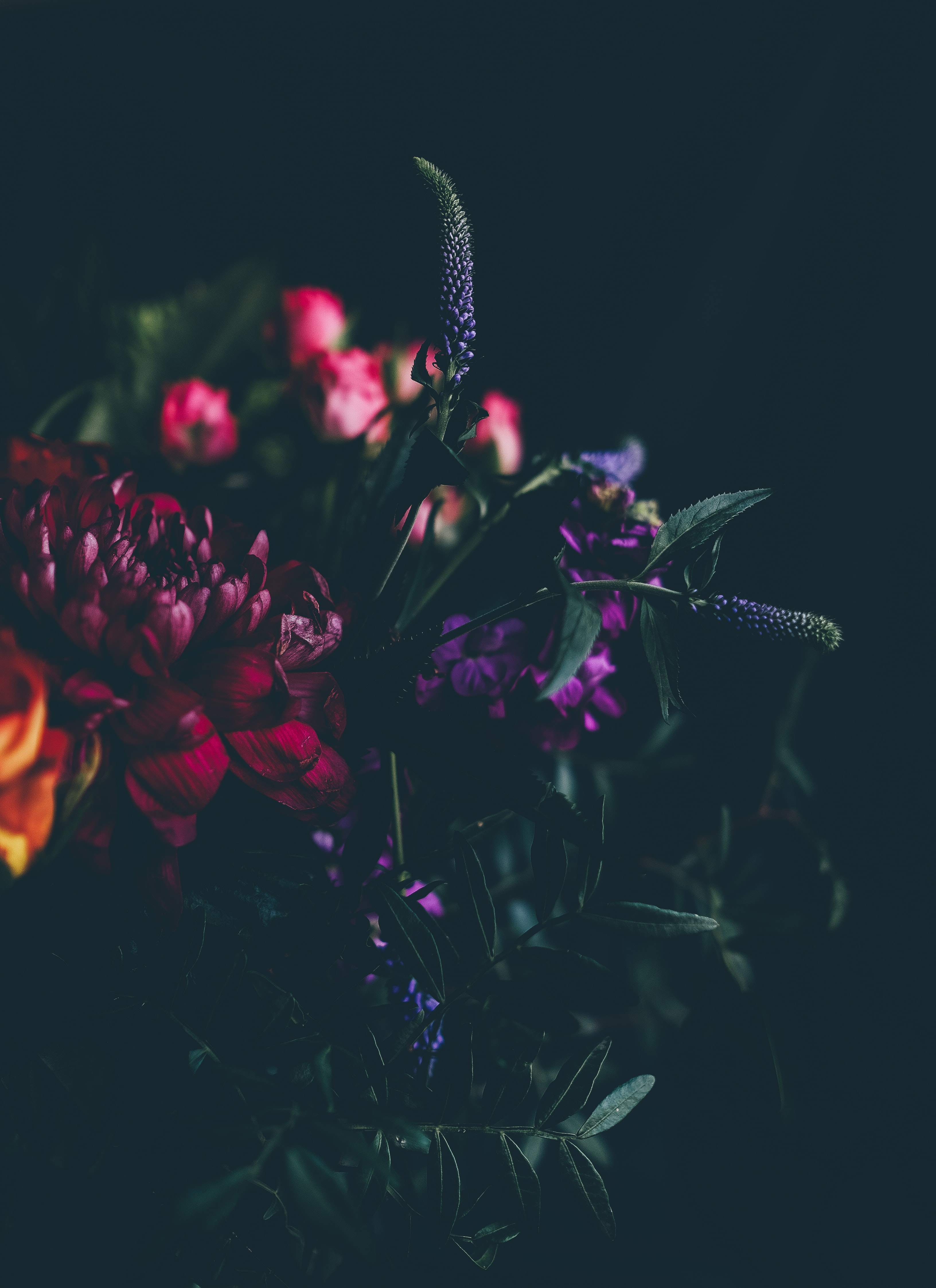 A dim shot of various flowers in intense colors