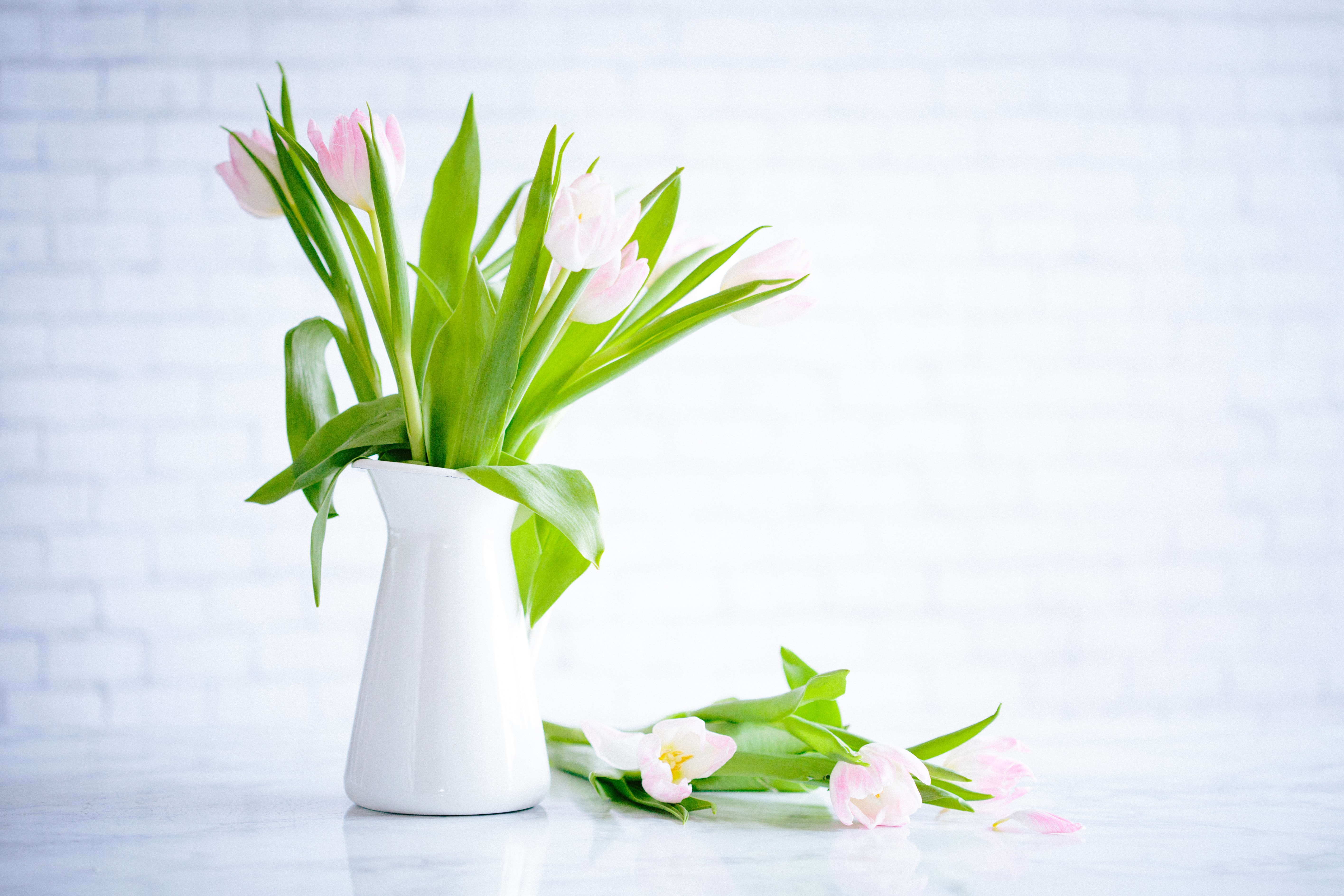 White vase with pink and white tulips and green stems in Spring, Salt Lake City