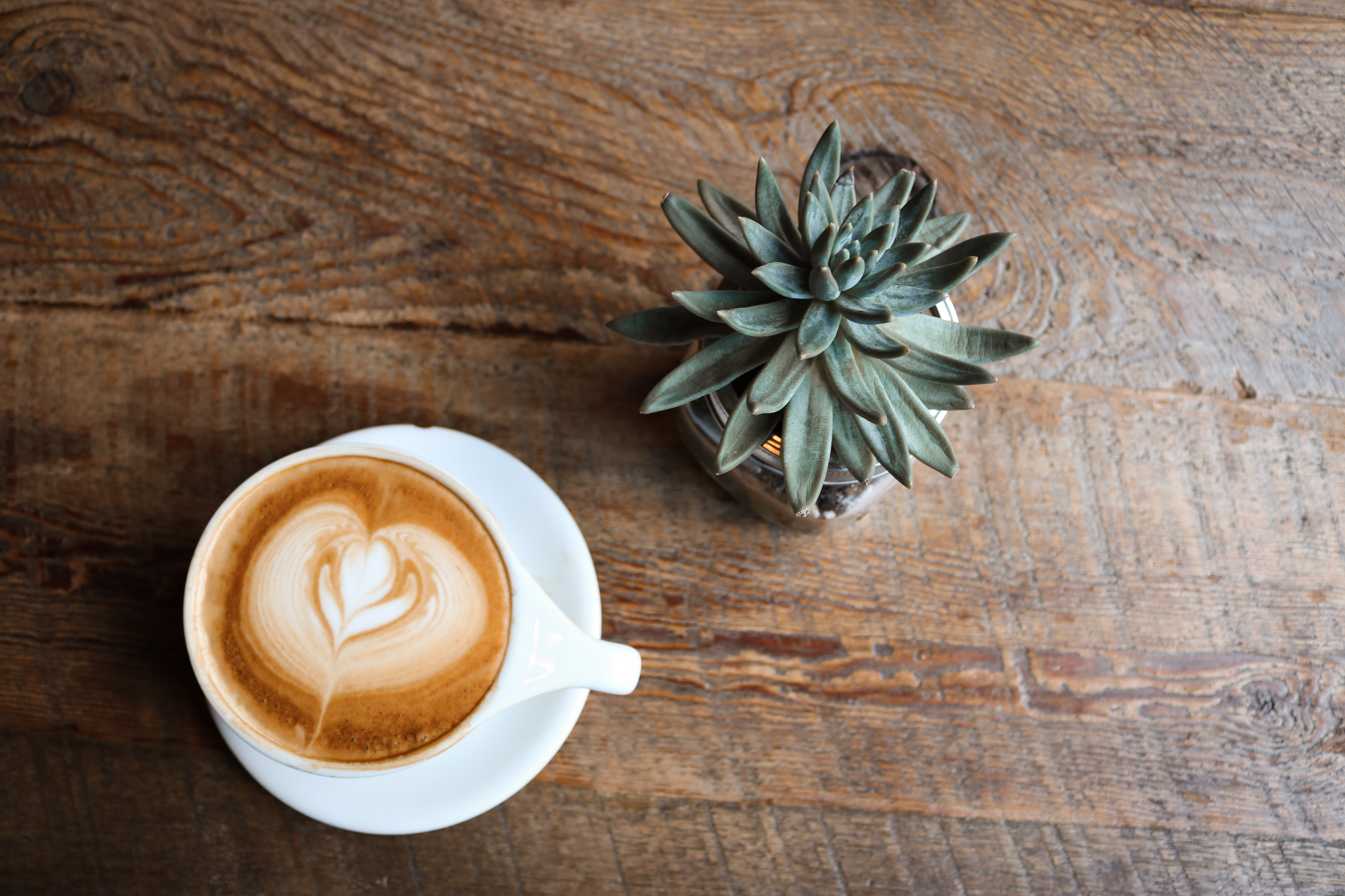 coffee in teacup near green succulent plant