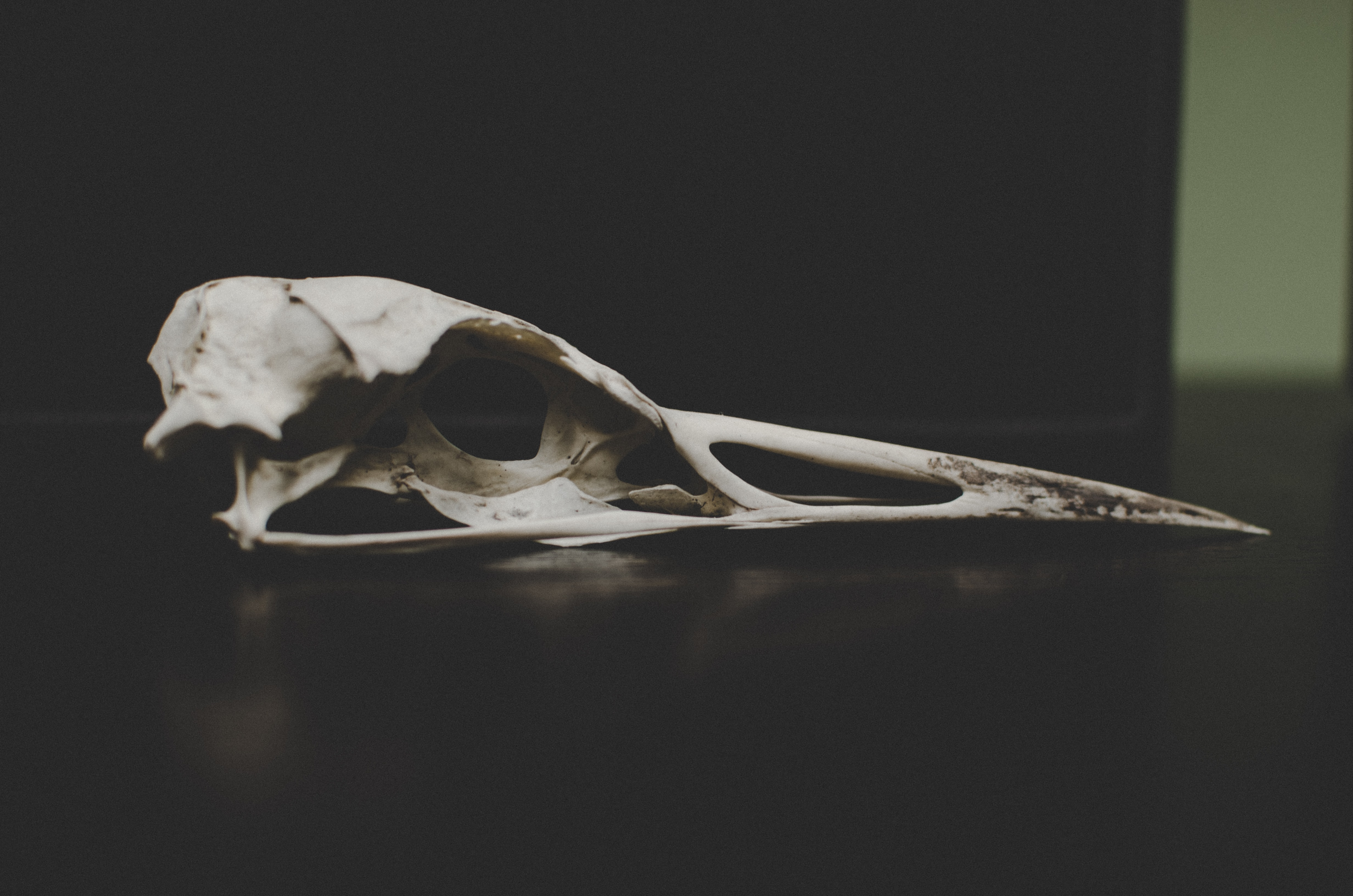 The skull of a bird with long beak in the Isle of Wight