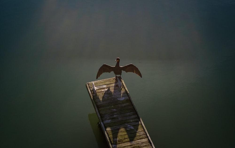 brown bird standing on brown wooden boardwalk