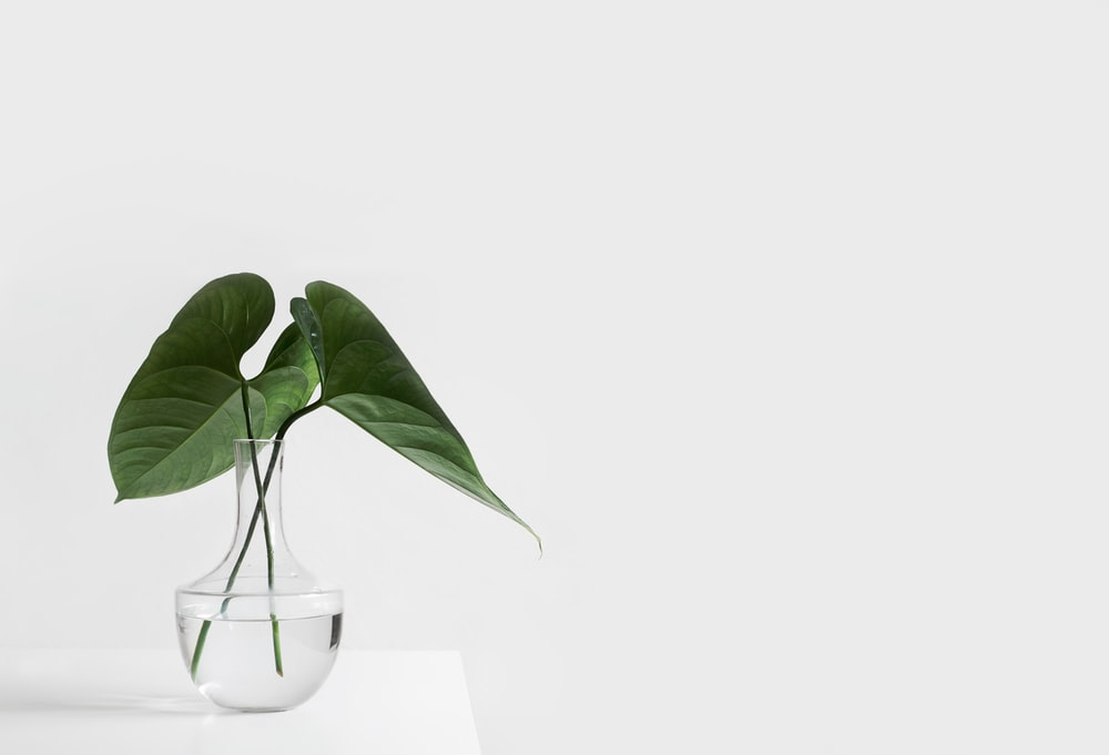 green leafed plant on clear glass vase filled with water