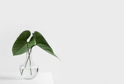 green leafed plant on clear glass vase filled with water minimalist zoom background