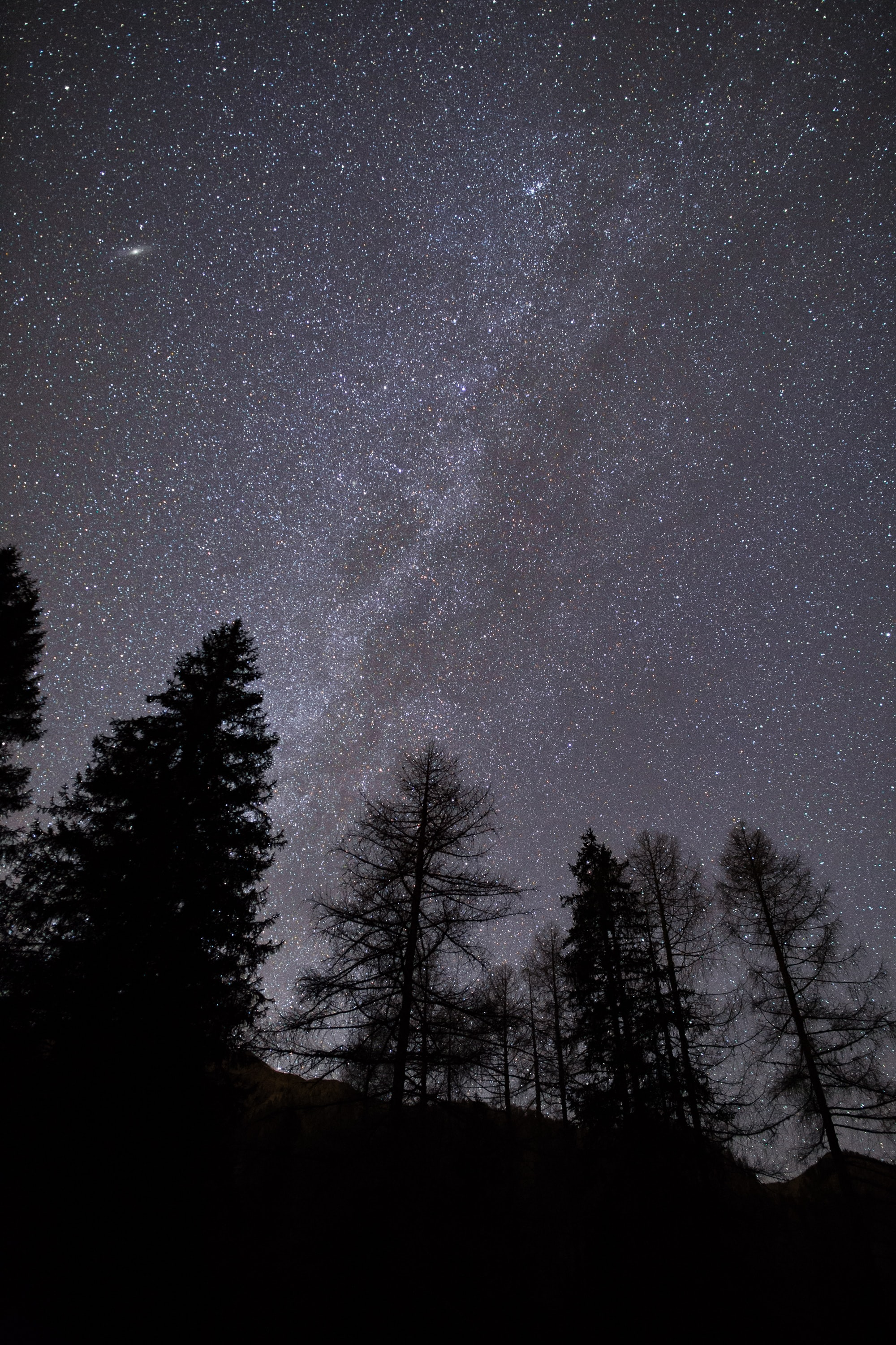 Looking up at the stars and Milky Way over silhouetted pine trees in Giau Pass
