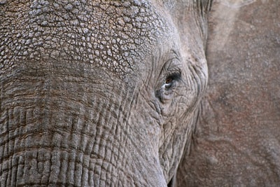 closeup photo of elephant face