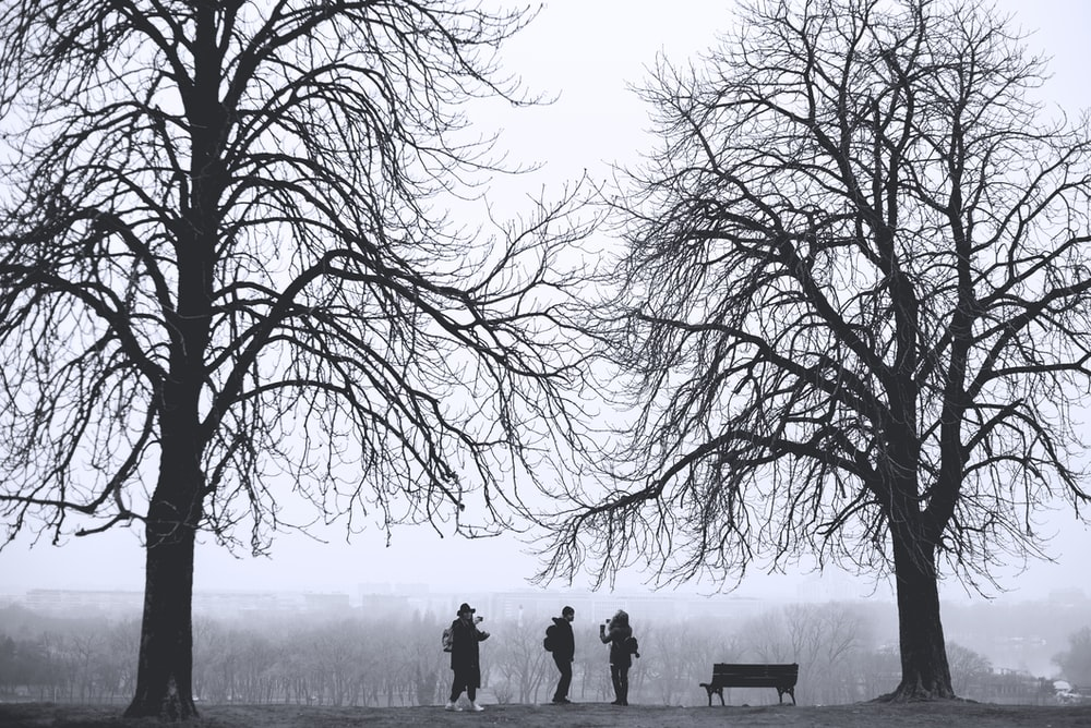 silhouette of three person standing between leafless trees at daytime
