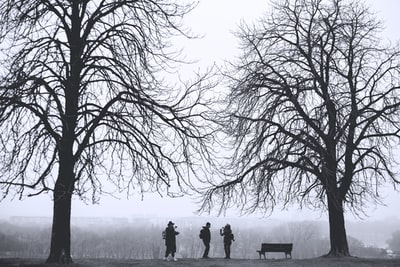 silhouette of three person standing between leafless trees at daytime serbia zoom background
