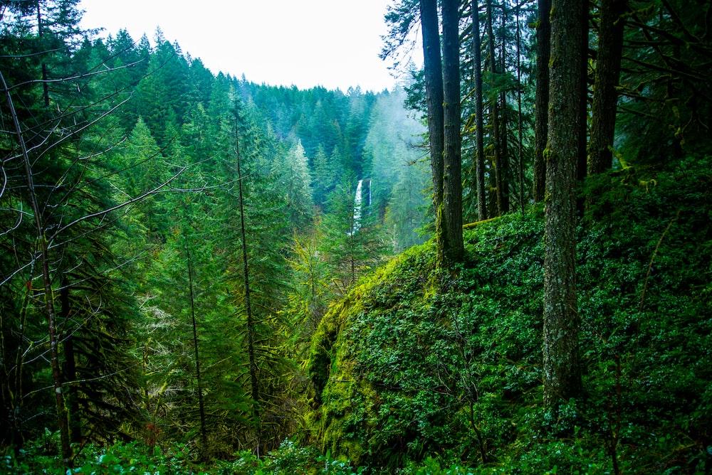 Pacific Northwest 12 Best Free Pacific Northwest Forest Pnw