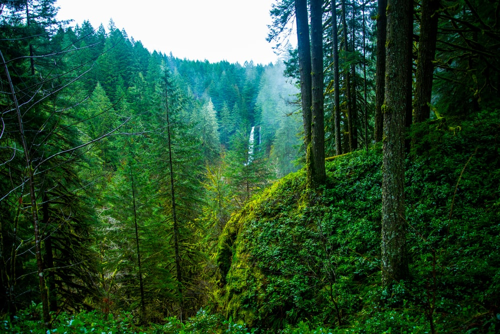 pacific northwest 12 best free pacific northwest forest pnw and