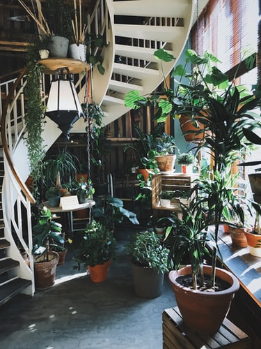 Spiral staircase covered by plants