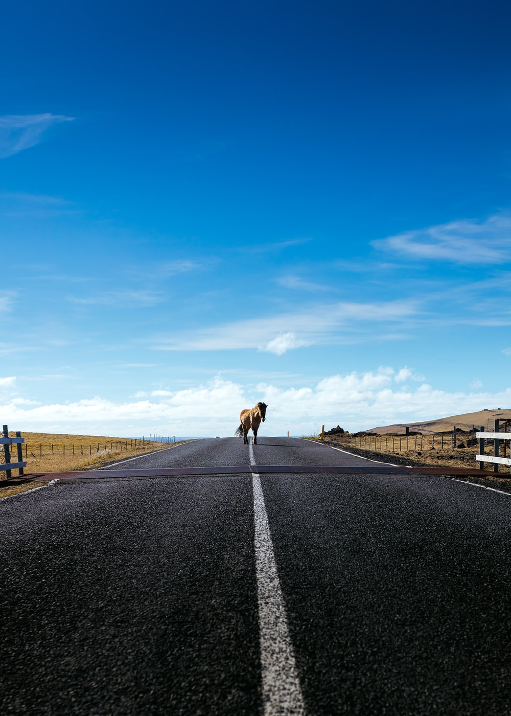 A horse walking down a tarmac road on a bright day