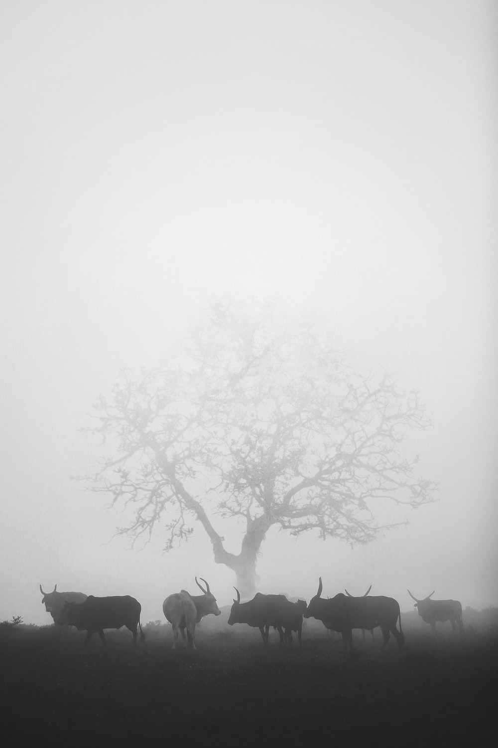grayscale photo of trees on fog