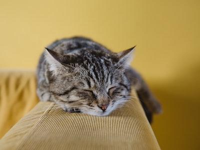 Cat photo by Sabri Tuzcu on unsplash.com