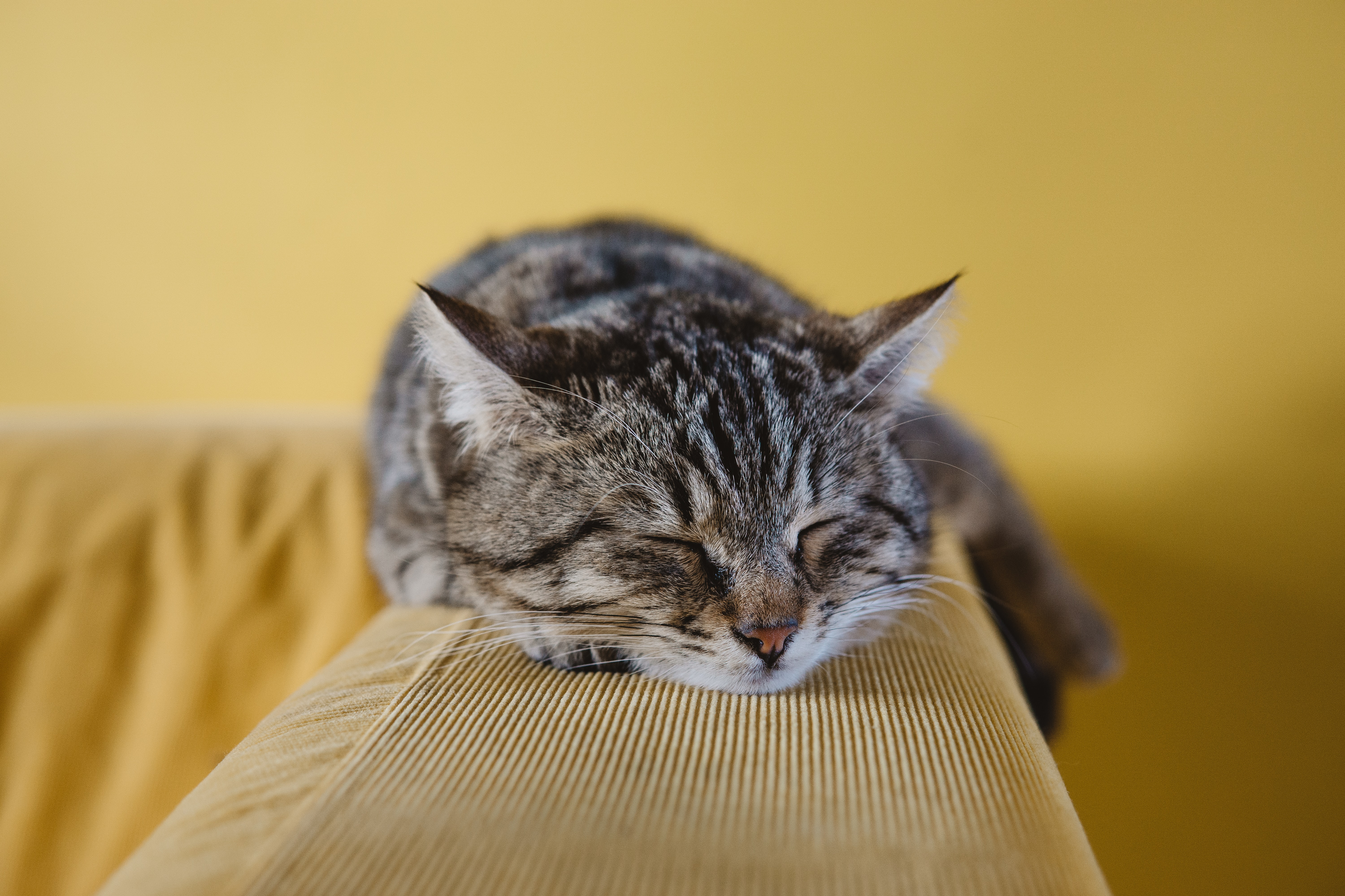 shallow focus photography of brown tabby kitten on couch