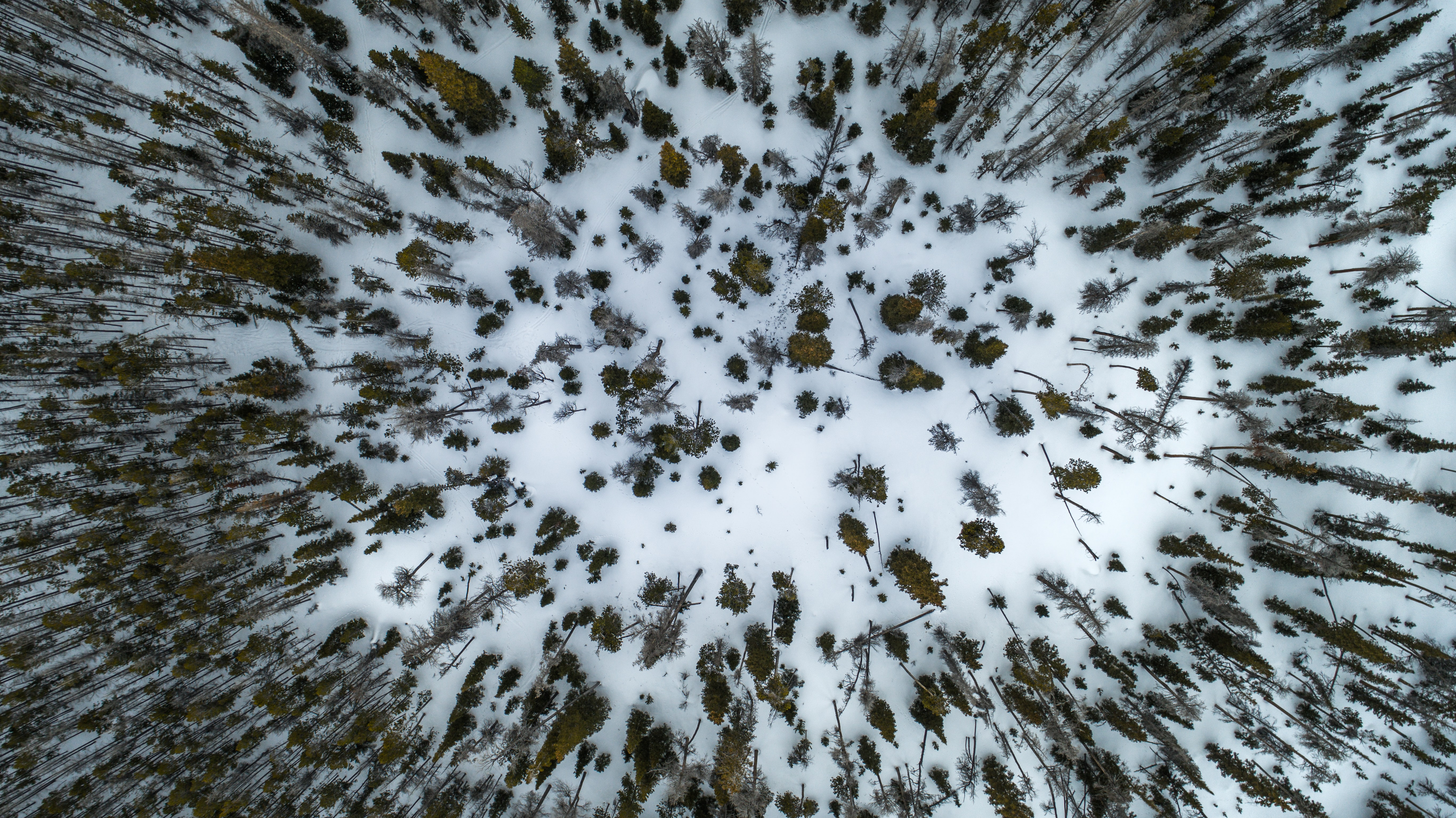 aerial view photography of pine trees on snow field