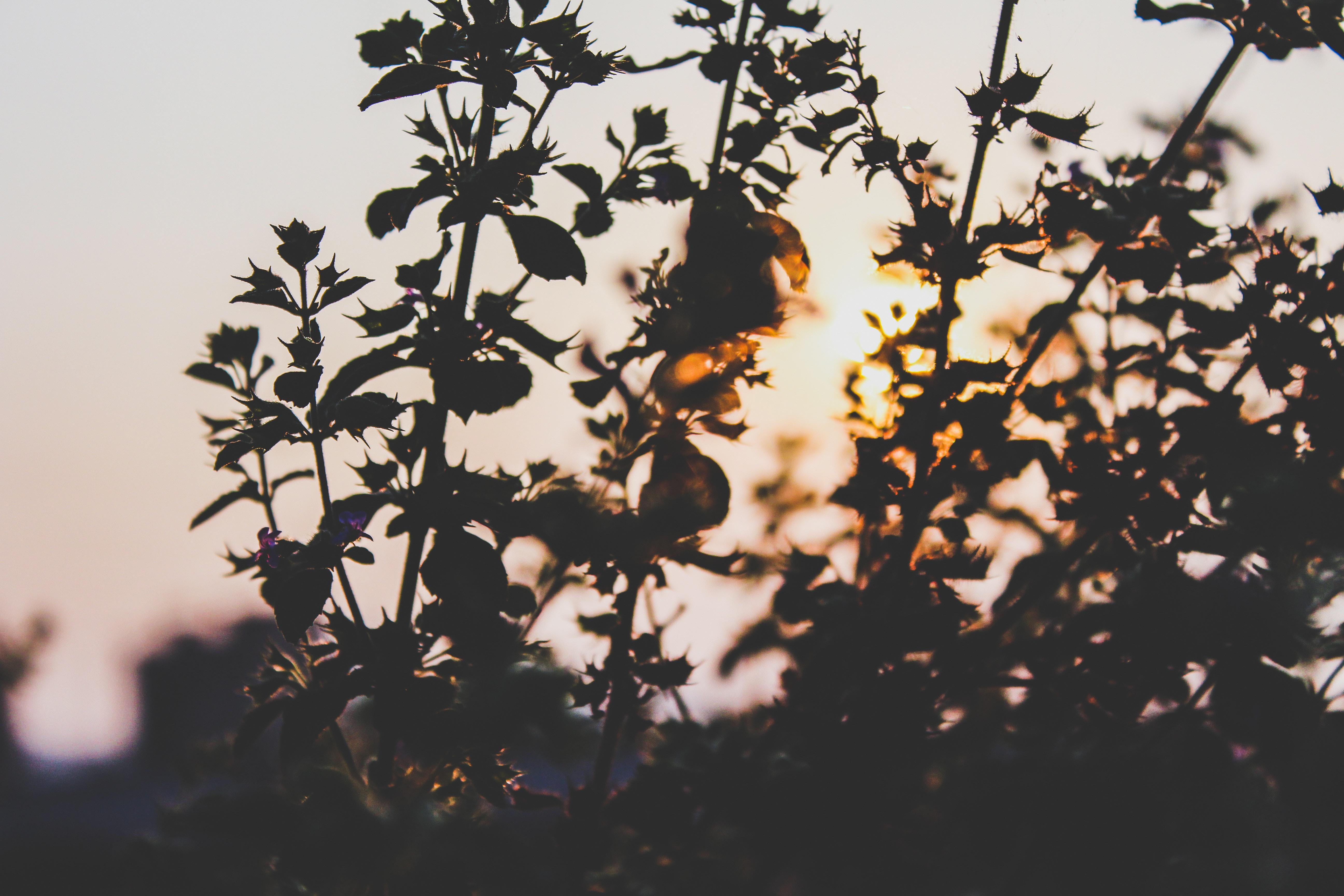 plants under calm sky