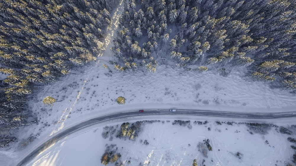 aerial photography of two red and white vehicles on road near trees at daytime