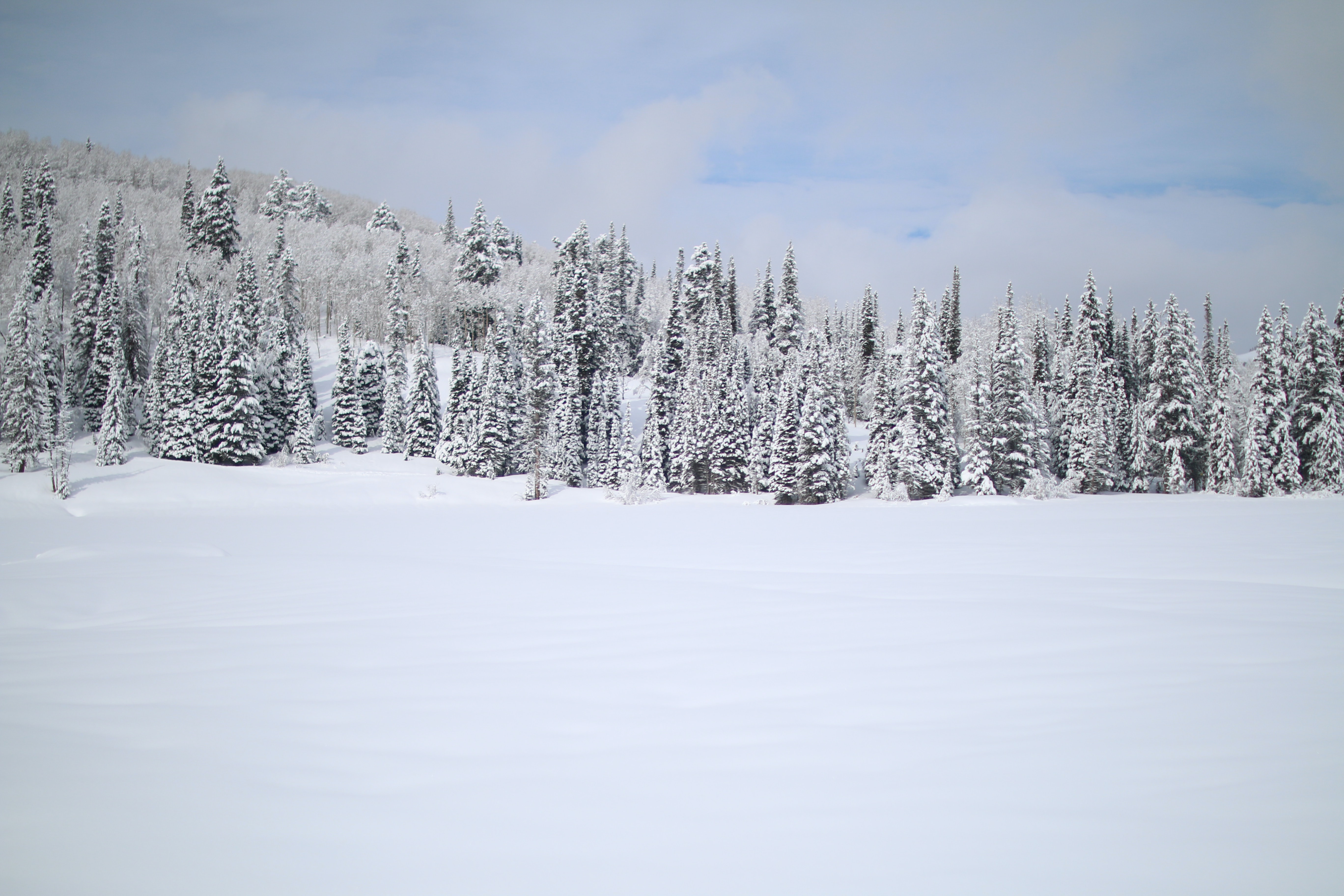 A forestscape image on a cloudy day in Solitude Nordic Center in Utah