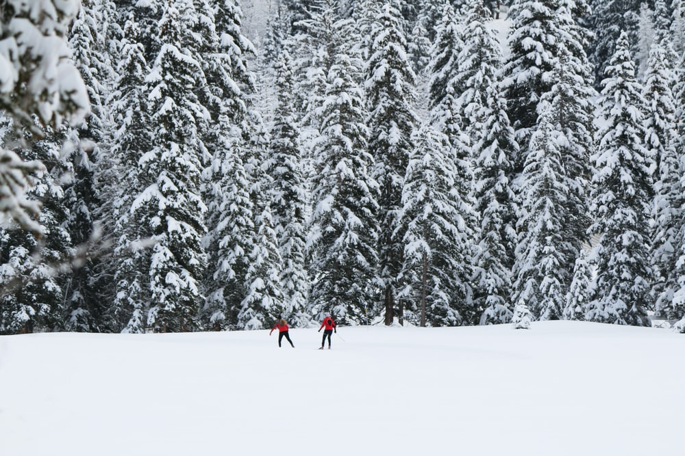 two people standing on snow plain in front of trees