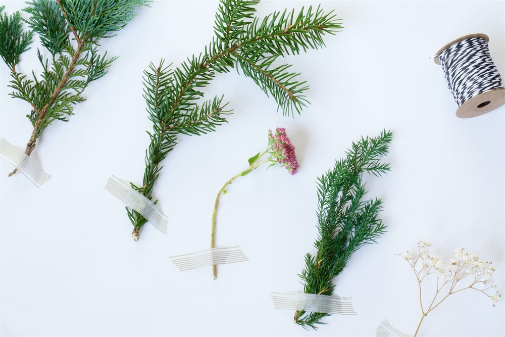 five plants near spool