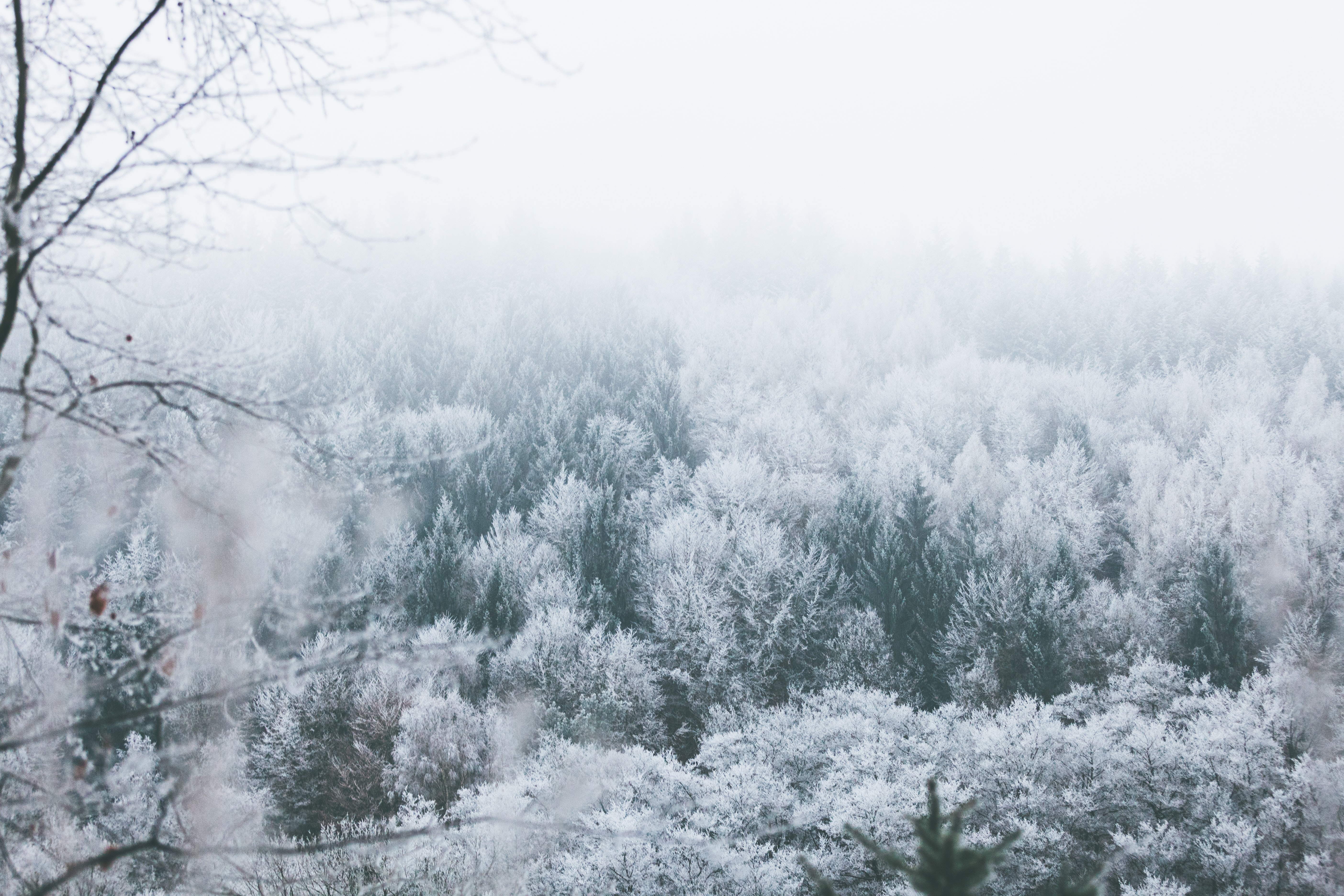 A look down onto the snowy tree tops in a forest