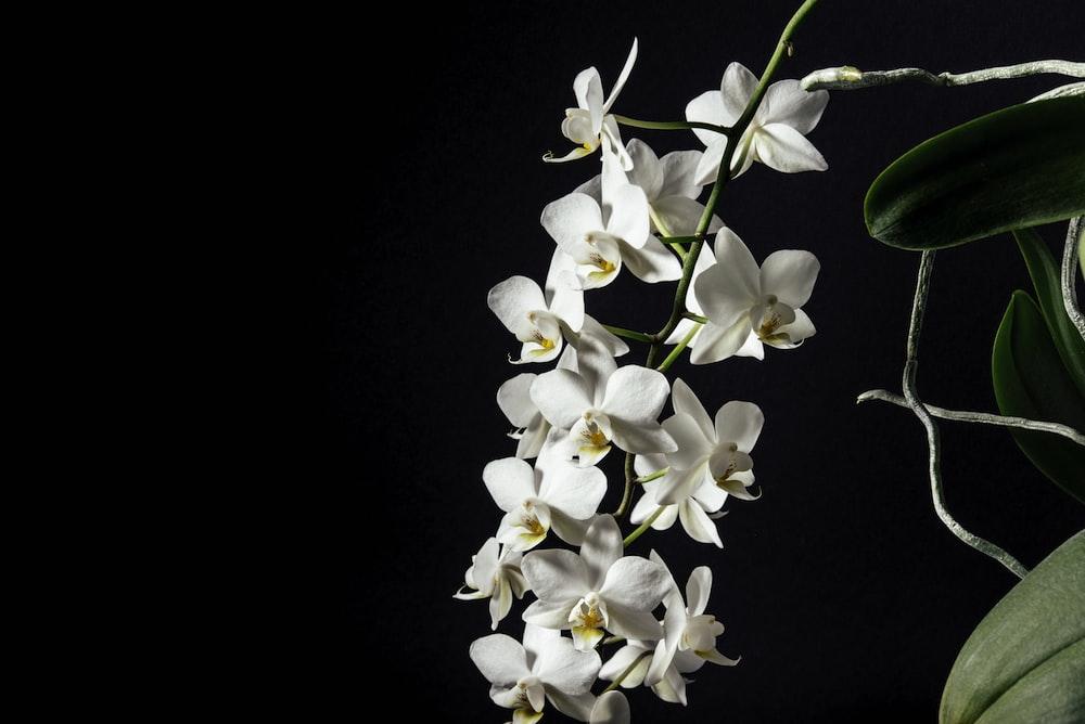 tilt-shift lens photography of white flowers