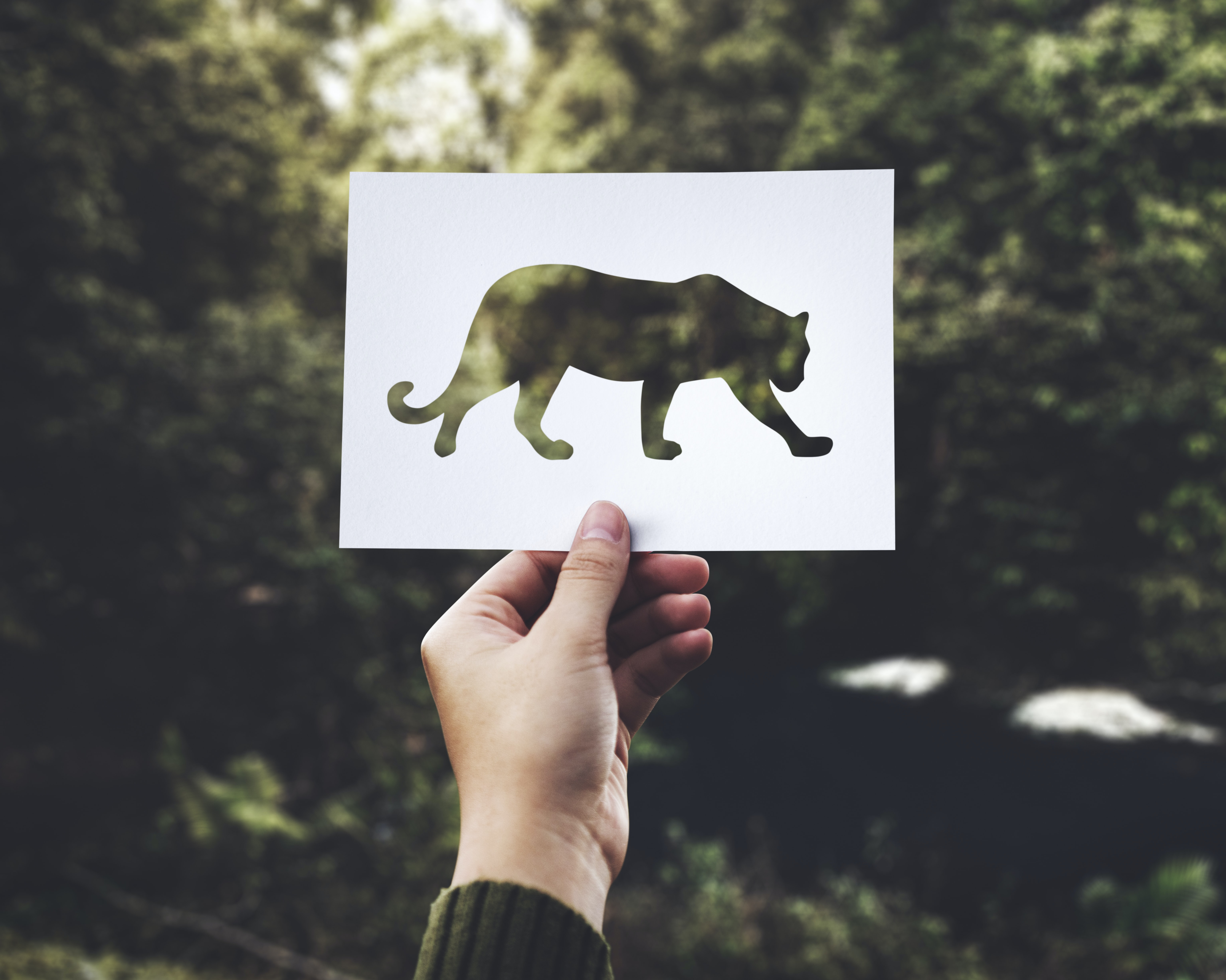 A cutout in the shape of a big cat in a person's hand