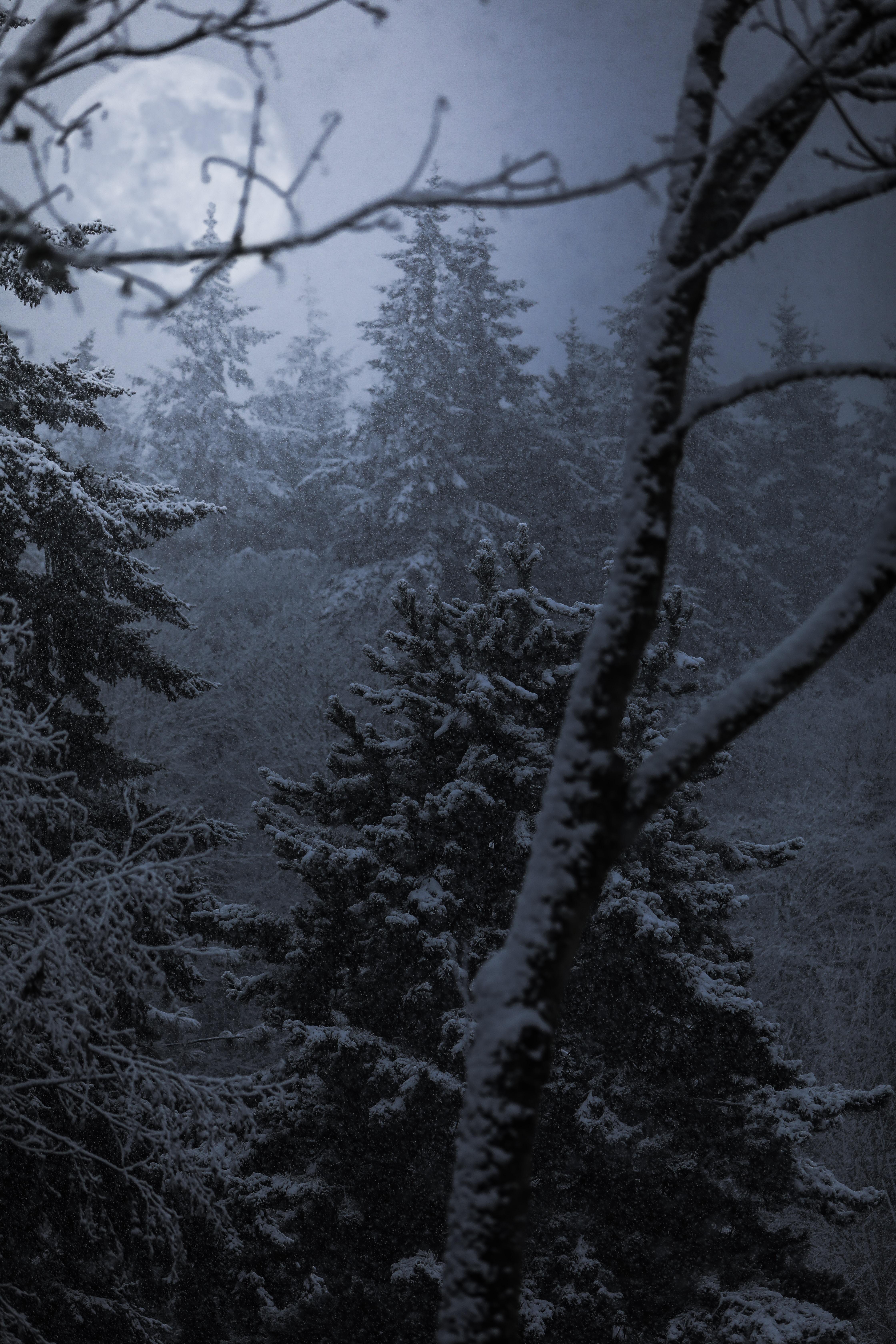 trees coated snow