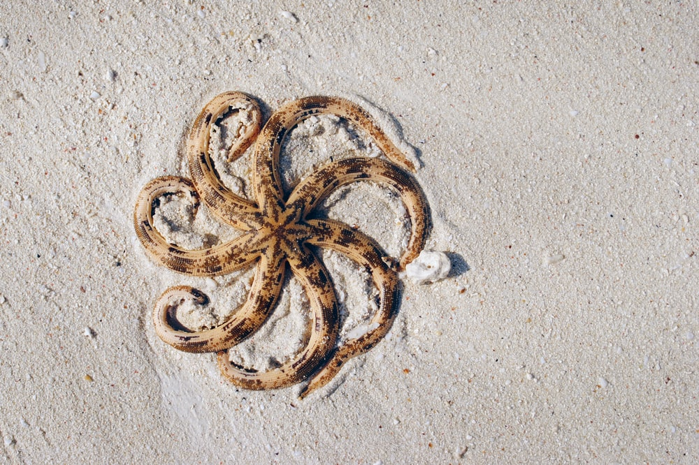 aerial photography of brown and black octopus on sands