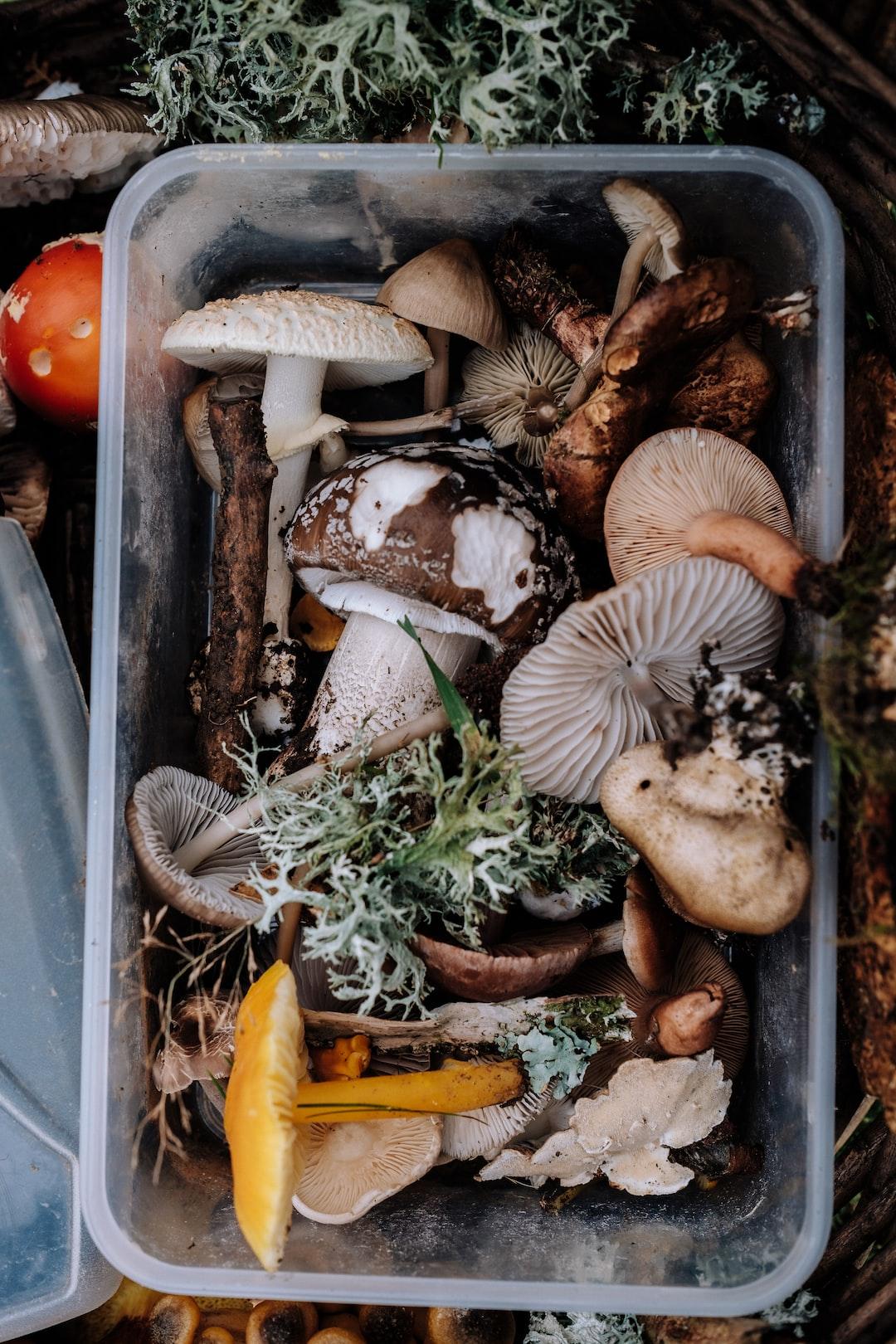 Fungi Foraging