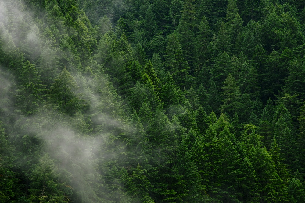 green pine trees during daytime