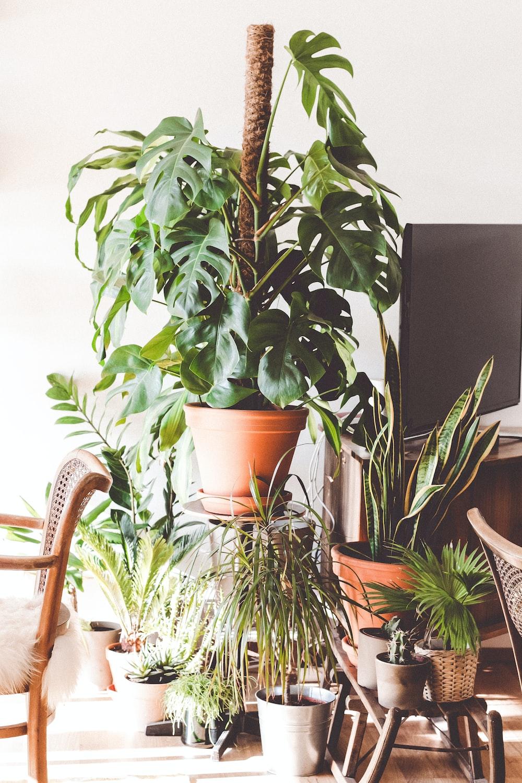 green plants between armchair and flat screen TV