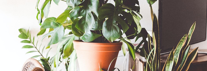 Create an Indoor Herb Garden