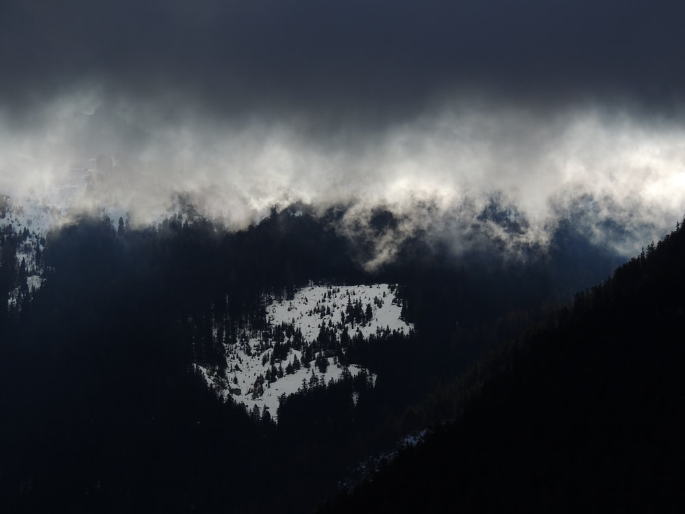 green pine trees under gray and white clouds