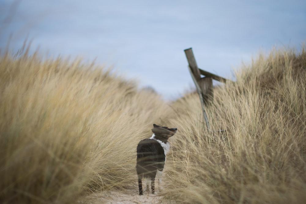 tilt shift lens photo of black dog